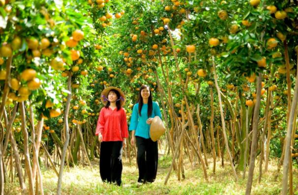 Vuon Trai Cay Lai Thieu Dia Diem Binh Duong (2)