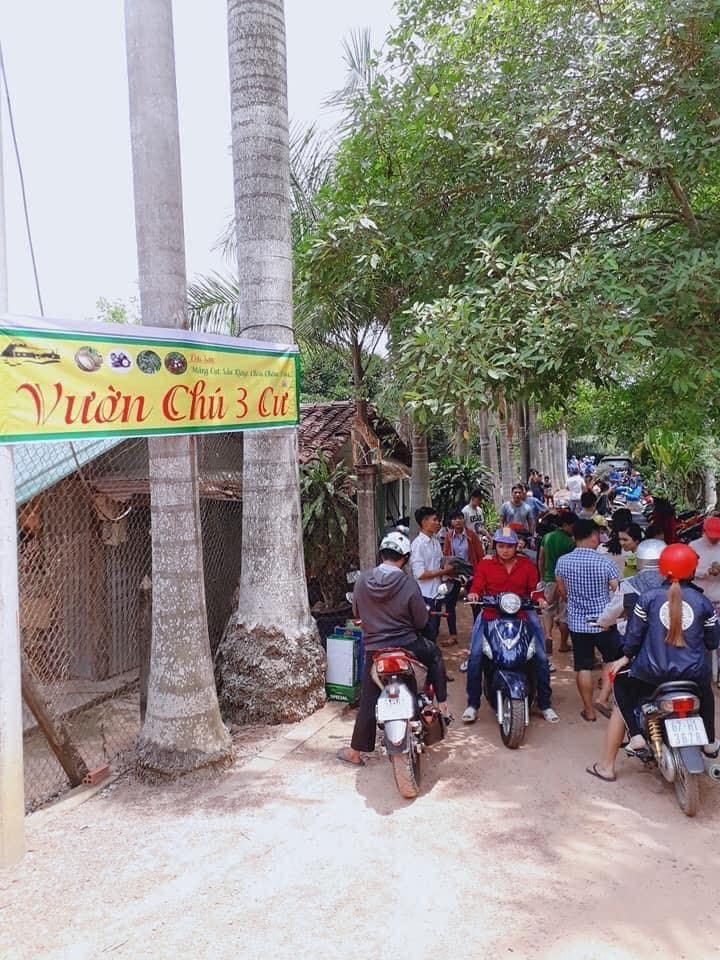 Vuon Trai Cay Chu Ba Cu12